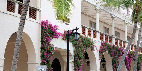 Plant, Flower, Magenta, Pink, Purple, Real estate, Petal, Facade, House, Violet,