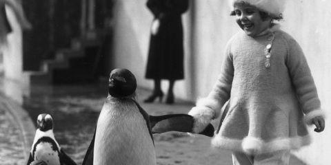 Penguin, People, Photograph, Bird, Flightless bird, Adaptation, Beak, Terrestrial animal, Monochrome, Snapshot,