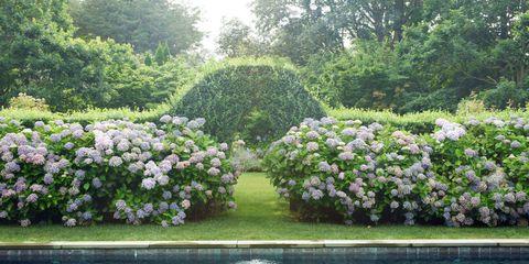 Vegetation, Shrub, Plant, Garden, Flower, Plant community, Botany, Groundcover, Spring, Landscaping,
