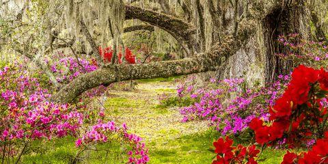 Nature, Vegetation, Petal, Flower, Shrub, Plant community, Landscape, Red, Natural landscape, Garden,