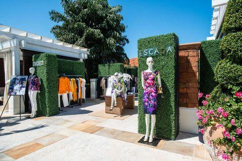 Shrub, Garden, Hedge, Shade, Flowerpot, Retail, Annual plant, Floristry, Landscaping, Floral design,