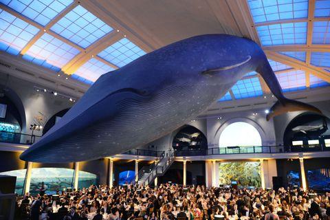 Vertebrate, Crowd, Marine mammal, Audience, Ceiling, Cetacea, Fin, Blue whale, Marine biology, Daylighting,