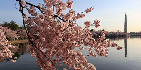 Branch, Flower, Blossom, Petal, Spring, Bank, Reflection, Botany, Twig, Reservoir,