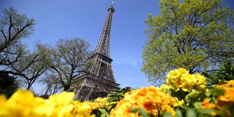 Daytime, Yellow, Petal, Tower, Flower, Shrub, Summer, Landmark, Woody plant, Spring,