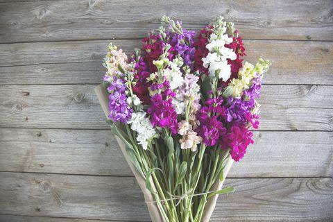 YOU ROCK Matthiola Incana the bouqs flowers