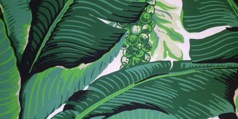 Leaf, Terrestrial plant, Flowering plant, Banana family, Banana leaf, Jungle, Plant stem, Herbaceous plant, Perennial plant, Plantation,