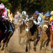 Halter, Jockey, Bridle, Shoe, Horse tack, Rein, Vertebrate, Horse, Animal sports, Horse supplies,