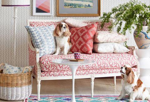 Interior design, Room, Vertebrate, Carnivore, Dog, Home, Interior design, Furniture, Dog breed, Flowerpot,