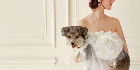 Dog breed, Shoulder, Textile, Mammal, Dog, Carnivore, Dress, Strapless dress, Bridal clothing, Hair accessory,