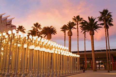 Amber, Arecales, Street light, Shade, Column, Palm tree, Evening,