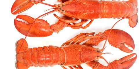 Arthropod, Invertebrate, Organism, Red, Orange, Decapoda, Crustacean, Peach, Lobster, Marine invertebrates,