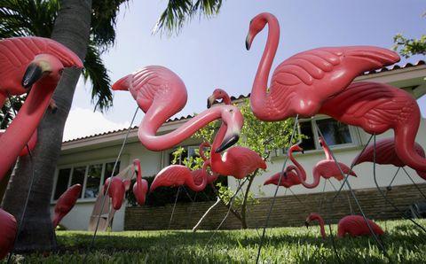 Flamingo, Red, Pink, Greater flamingo, Bird, Water bird, Beak, Garden, Coquelicot, Palm tree,