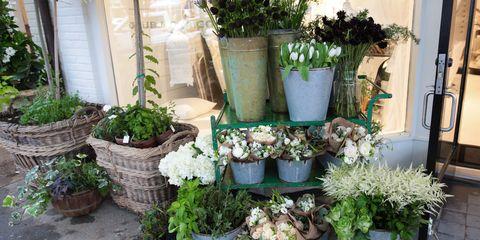 Flowerpot, Plant, Flower, Interior design, Petal, Houseplant, Shrub, Bouquet, Annual plant, Flower Arranging,