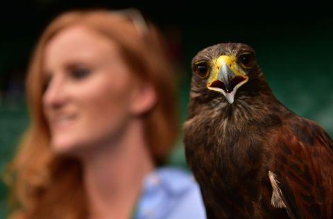 Brown, Skin, Bird, Beak, Accipitridae, Bird of prey, Accipitriformes, Iris, Organ, Falconiformes,