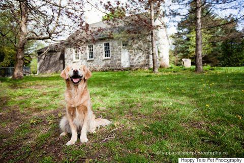 Dog breed, Carnivore, Dog, Mammal, Sporting Group, House, Working animal, Companion dog, Home, Canidae,