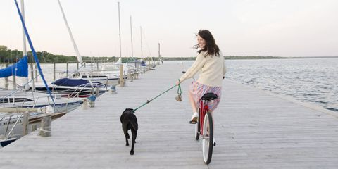 Bicycle wheel rim, Bicycle tire, Watercraft, Dog, Carnivore, Dog breed, Bicycle, Leash, Bicycle wheel, Bicycle accessory,