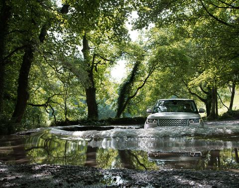 Nature, Reflection, Automotive exterior, Watercourse, Forest, Trunk, Wetland, Woodland, Stream, Fluvial landforms of streams,