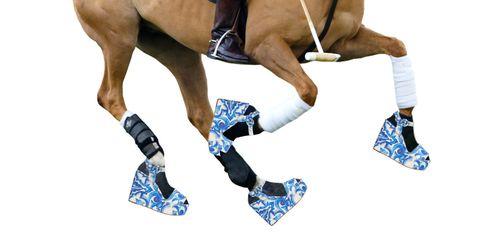 Human leg, Muscle, Azure, Knee, Liver, Sorrel, Thigh, Tan, Calf, Horse,