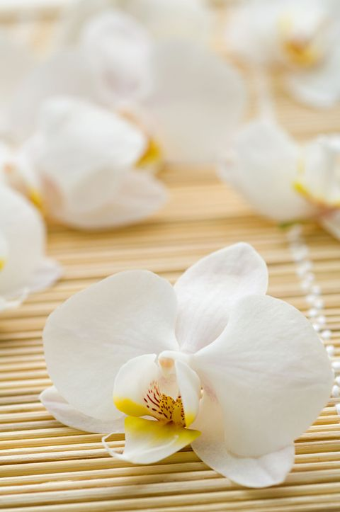 Petal, Yellow, White, Flower, Flowering plant, Botany, Blossom, Artificial flower, Still life photography, Moth Orchid,