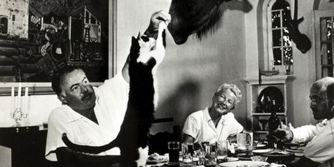 Vertebrate, Sitting, Tableware, Serveware, Carnivore, Plate, Small to medium-sized cats, Fur, Drinkware, Monochrome photography,