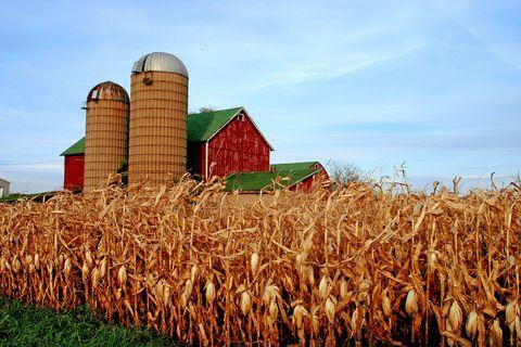 Midwestern Landscape