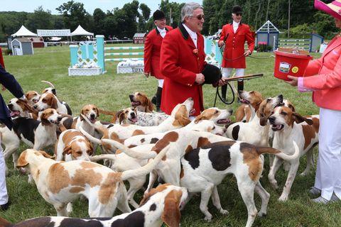 Human, Vertebrate, Dog, Carnivore, Herd, Liver, Fur, Dog breed, Canidae, Fawn,