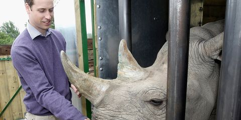 Human, Rhinoceros, Black rhinoceros, Horn, White rhinoceros, Jaw, Organ, Terrestrial animal, Natural material, Sumatran rhinoceros,