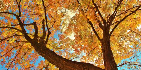Branch, Nature, Deciduous, Yellow, Twig, Leaf, Orange, Colorfulness, Tree, Amber,