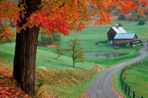 Nature, Natural landscape, Plant, Deciduous, Leaf, Landscape, Tree, Woody plant, House, Autumn,