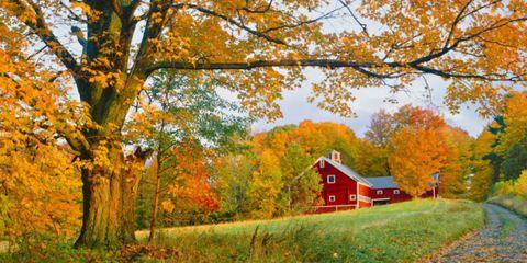 Nature, Branch, Deciduous, Natural landscape, Leaf, Tree, Landscape, Twig, House, Autumn,