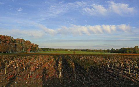 Agriculture, Farm, Field, Plantation, Crop, Cash crop, Deciduous, Autumn,