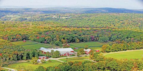 Vegetation, Nature, Plant, Natural landscape, Landscape, Tree, Land lot, Garden, Plain, Rural area,