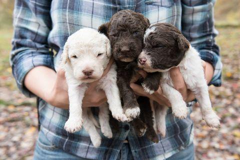 Human, Skin, Vertebrate, Textile, Denim, Pattern, Plaid, Dog, Carnivore, Dog breed,