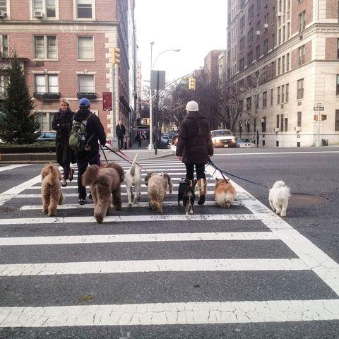 Human, Road, Window, Dog, Vertebrate, Infrastructure, Carnivore, Mammal, Street, Dog breed,