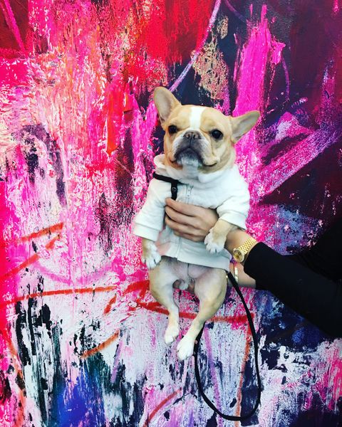 Magenta, Pink, Dog, Colorfulness, Carnivore, Dog breed, Purple, Dog supply, Snout, Paint,