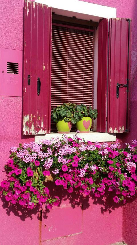 Magenta, Petal, Flower, Purple, Pink, Wall, Flowerpot, Fixture, Shrub, Tints and shades,