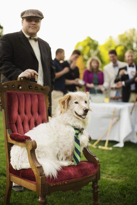 Human, Dog breed, Hat, Dog, Carnivore, Furniture, Cap, Chair, Companion dog, Sporting Group,