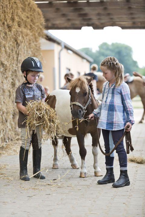 Human, Vertebrate, Working animal, Horse supplies, Mammal, Horse, Halter, Helmet, Bridle, Horse tack,