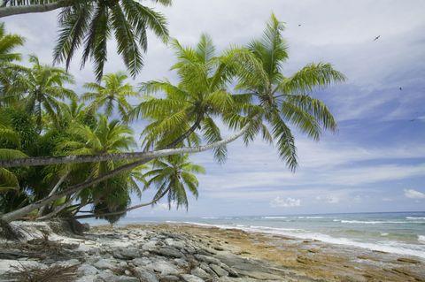Body of water, Sky, Coastal and oceanic landforms, Shore, Tree, Coast, Arecales, Ocean, Beach, Woody plant,