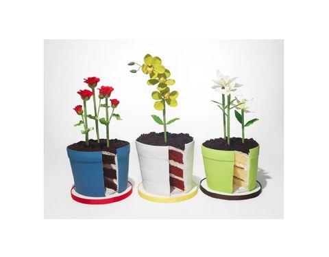 Flowerpot, Leaf, Flower, Botany, Flowering plant, Interior design, Petal, Plant stem, Houseplant, Annual plant,