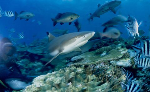 Underwater, Organism, Fluid, Natural environment, Vertebrate, Water, Fish, Ocean, Fin, Sea,