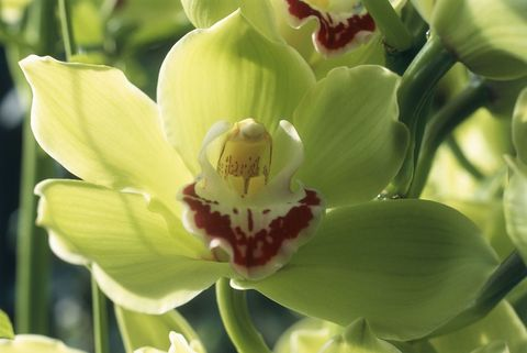 Yellow, Petal, Flower, Flowering plant, Botany, Terrestrial plant, Spring, Herbaceous plant, Macro photography, Orchid,