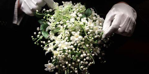 Flower, Moschatel family, Viburnum, Alyssum, Cornales, Pittosporaceae,
