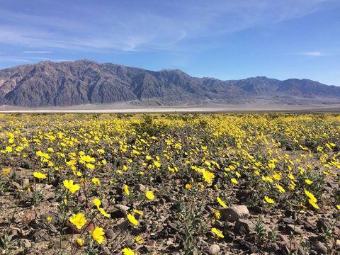 Yellow, Plant community, Field, Agriculture, Flower, Mountain range, Wildflower, Ecoregion, Soil, Wilderness,
