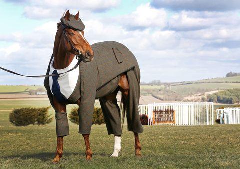 Brown, Working animal, Horse, Plain, Sorrel, Grassland, Ecoregion, Horse supplies, Pasture, Liver,