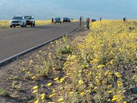 Yellow, Flower, Plant community, Automotive tire, Asphalt, Wildflower, Automotive parking light, Sport utility vehicle, Field, Subshrub,