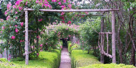 Shrub, Plant, Petal, Flower, Garden, Pink, Botany, Magenta, Walkway, Groundcover,