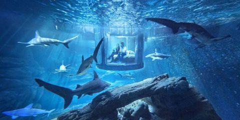 Underwater, Organism, Vertebrate, Water, Fin, Fluid, Fish, Marine mammal, Marine biology, Azure,