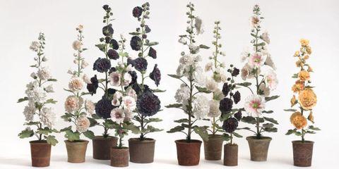 Flowerpot, Plant, Flower, Purple, Botany, Petal, Flowering plant, Interior design, Houseplant, Violet,