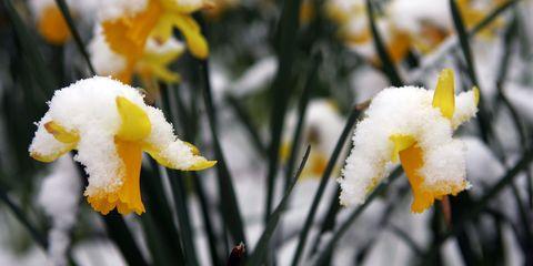 Daytime, Branch, Yellow, Petal, Flower, White, Freezing, Botany, Winter, Twig,
